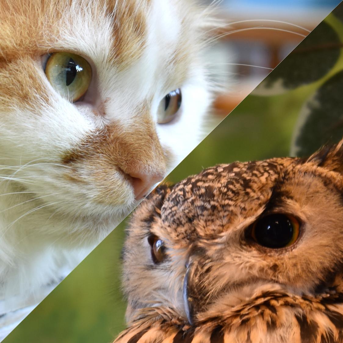 【癒し】倉敷美観地区のフクロウの森、猫カフェ紹介