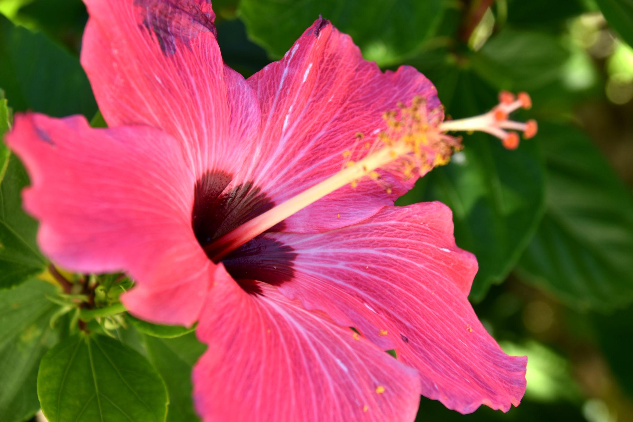 沖縄旅行記 ~沖縄の観光スポットを7つ紹介~